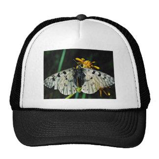 Phoebus' parnassian with yellow flower  flowers trucker hat