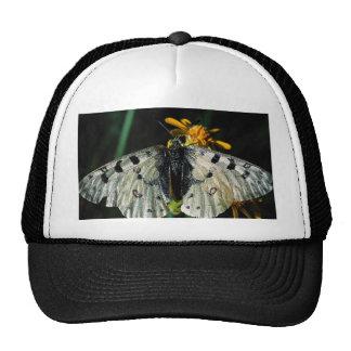 Phoebus' parnassian with yellow flower trucker hat