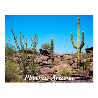 Phoenix Arizona Postcard