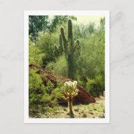 Phoenix Flora Postcards