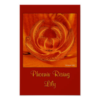 Phoenix Rising Lily Poster