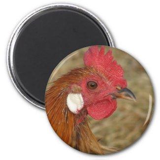 Phoenix Rooster magnet