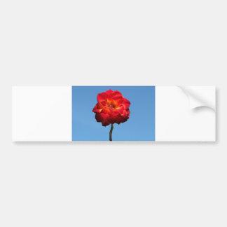 Phoenix Rose in the Sky-bumper sticker Car Bumper Sticker
