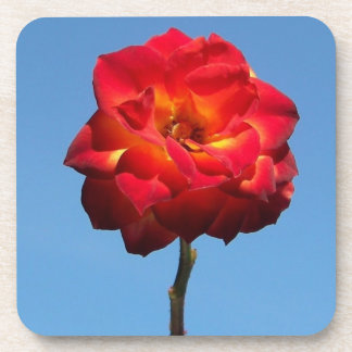 phoenix rose in the sky-cork coaster