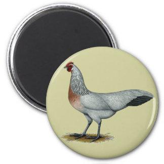 Phoenix:  Silver Duckwing Hen Refrigerator Magnet