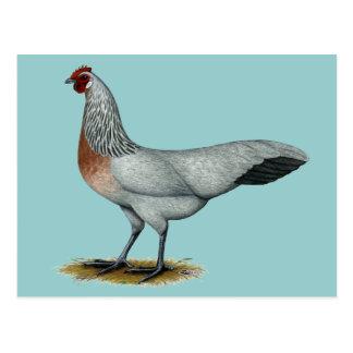 Phoenix Silver Duckwing Hen Postcard