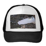 PHOGRAPHING FAIRIES TRUCKER HAT