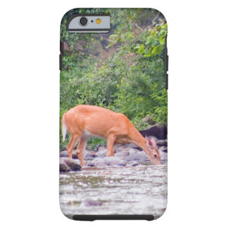 Phone Case Featuring Picture of Deer