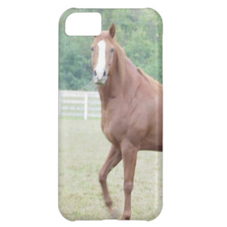 Phone cover with picture of beautiful brown horse cover for iPhone 5C
