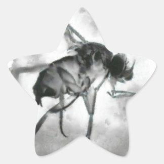 Phorid Fly Painting Star Sticker