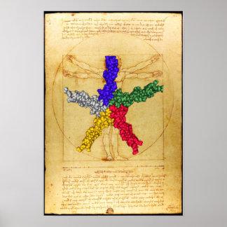 Phospholamban vesuviano póster