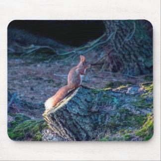 photgraph de la fauna de la ardilla roja alfombrilla de raton