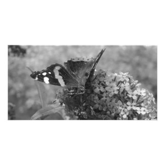 Photo Card - Admiral Butterfly in Black & White