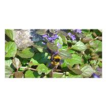 Photo Card - Busy Bee