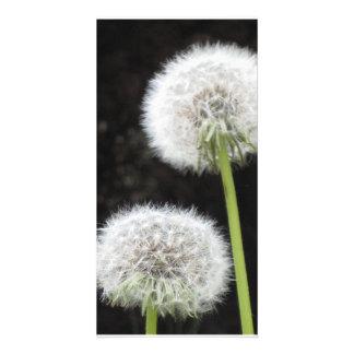 Photo Card - Dandelions