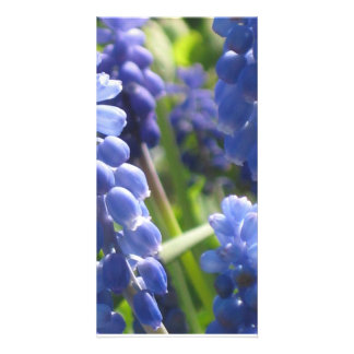 Photo Card - Grape Hyacinth