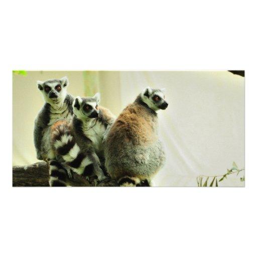Photo Card - Lemur - Ring-Tailed