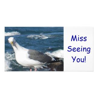 Photo Card: Looking Gull