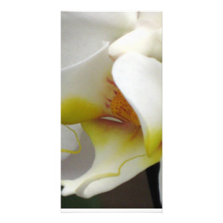Photo Card - Orchid