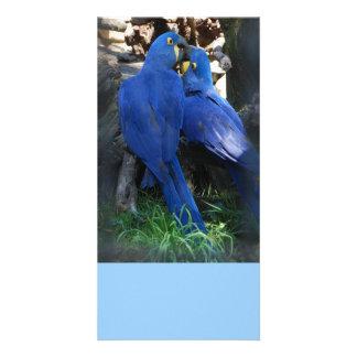 Photo Card - Parrots