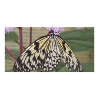 Photo Card - Ppaer Kite Butterfly