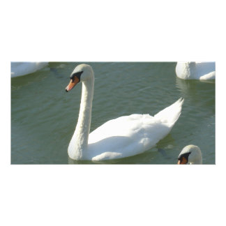 Photo Card - Swans in Colour
