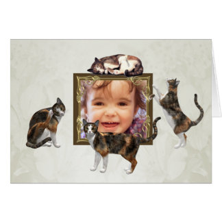 Photo card with calico cats