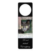 Photo cat , pet , animals 0072. door hanger