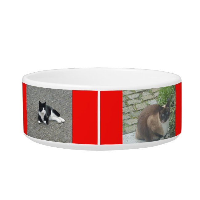 Photo Cust. Pet Bowl