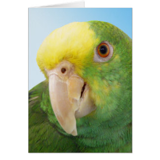 Photo Double Yellow Headed Amazon Parrot Card