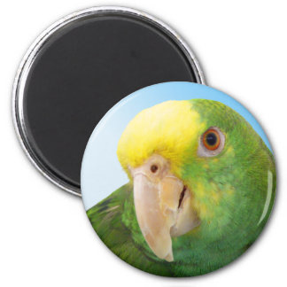 Photo Double Yellow Headed Amazon Parrot Fridge Magnets