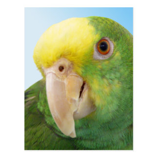 Photo Double Yellow Headed Amazon Parrot Postcard