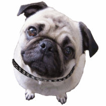 "Photo figure ""pug "" cutout"