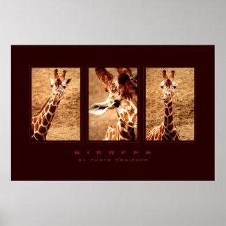 Photo -  Giraffe Poster