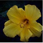 Photo Looking Inside a Yellow Flower Statuette
