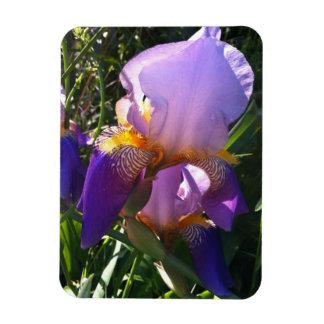 Photo Magnet - Purple Iris