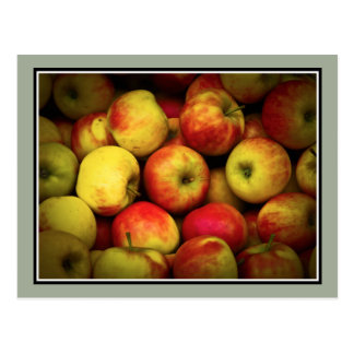 Photo of a Bushel Of Ripening Apples Postcard