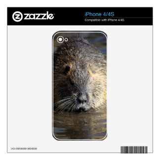 Photo of a coypu (Myocastor coypus) in water. iPhone 4S Decal