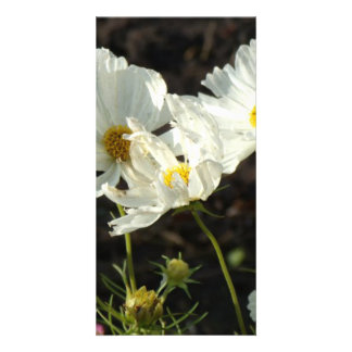 Photo of a Flower Bed of White and Gold Daisies Card