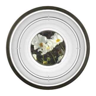 Photo of a Flower Bed of White and Gold Daisies Pet Bowl