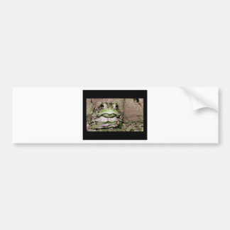 Photo of a funnycolorful fat toad frog bumper sticker