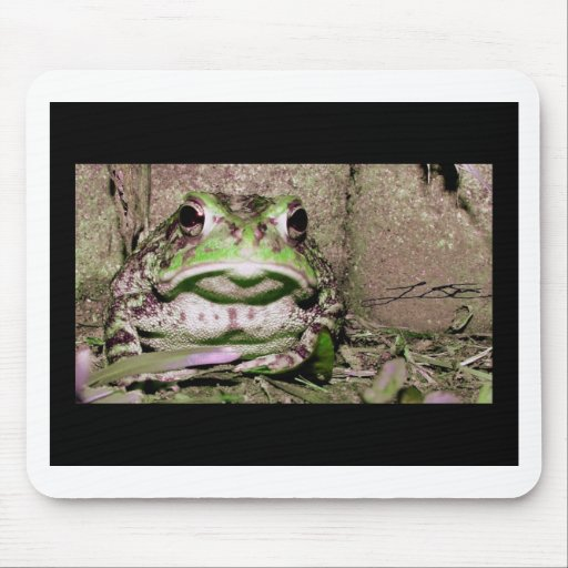 Photo of a funnycolorful fat toad frog mousepads