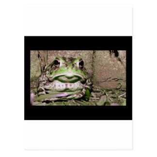 Photo of a funnycolorful fat toad frog postcard