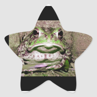 Photo of a funnycolorful fat toad frog star sticker