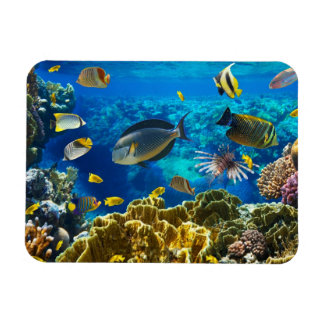 Photo of a tropical Fish on a coral reef Magnet