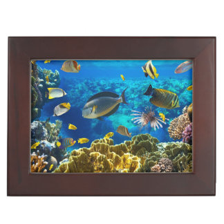 Photo of a tropical Fish on a coral reef Memory Box