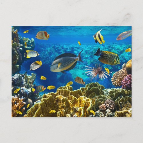 Photo of a tropical Fish on a coral reef Postcard