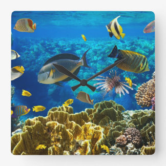 Photo of a tropical Fish on a coral reef Square Wall Clock