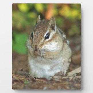Photo of adorable chipmunk plaque