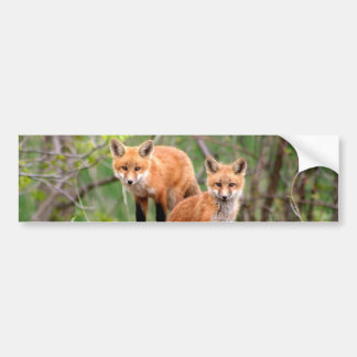 Photo of adorable red fox kits bumper sticker